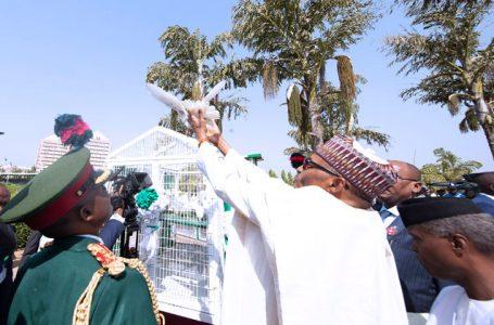 Fani-Kayode, Ezekwesili Mock Buhari As Pigeons Refuse To Fly During Armed Forces Remembrance day